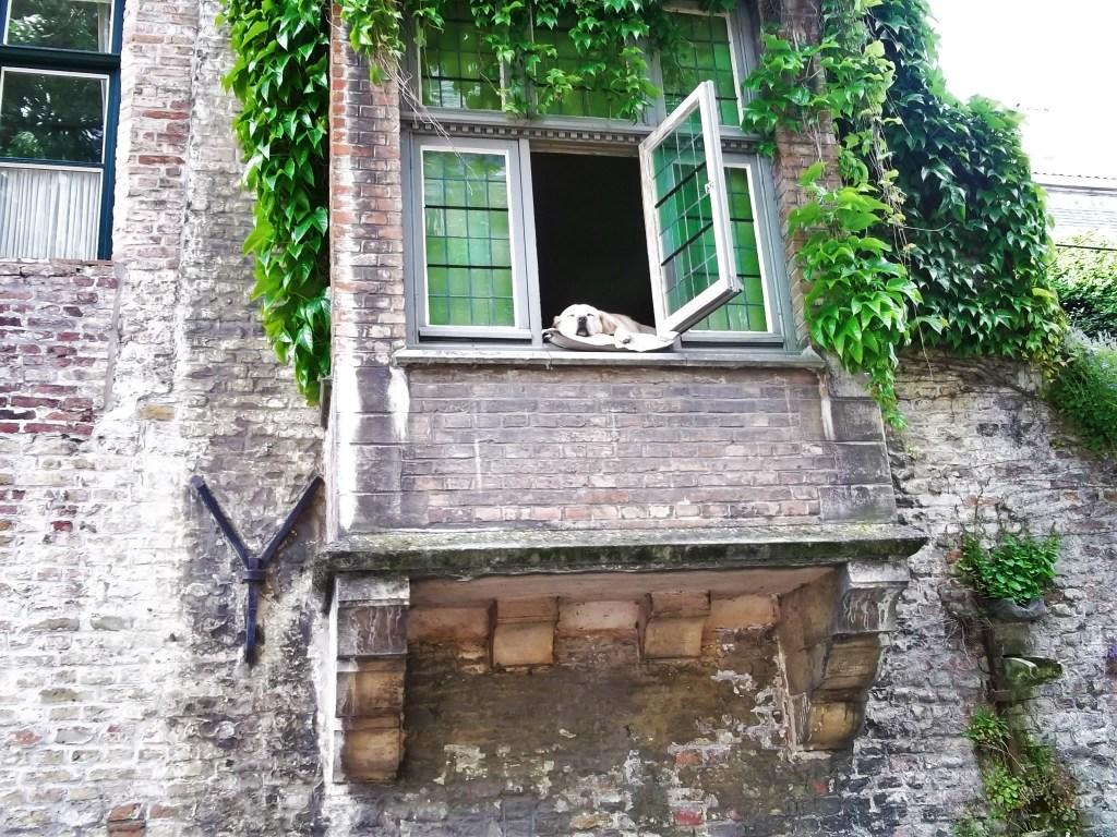 Chien, Bruges