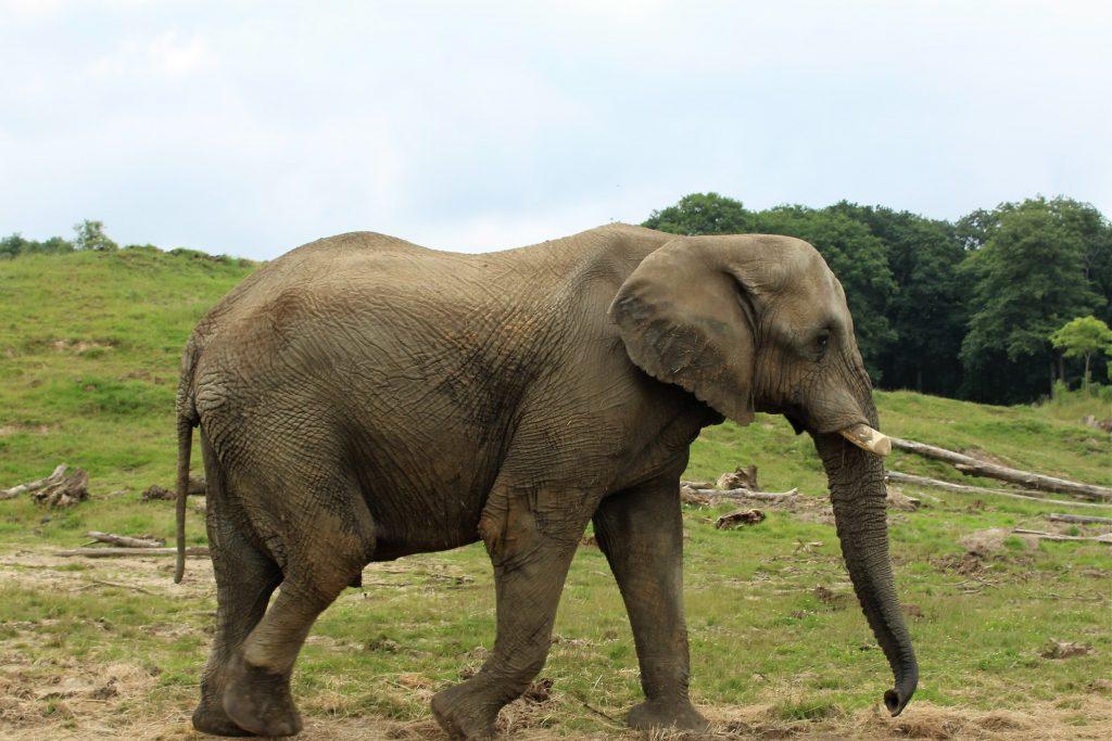 Zoo thoiry éléphant