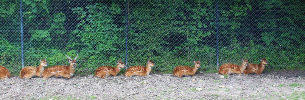 Zoo Thoiry