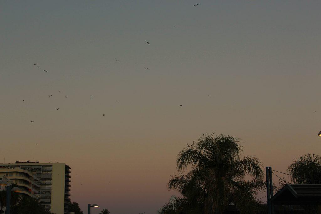 ciel, coucher de soleil
