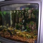 My home made TV Aquarium