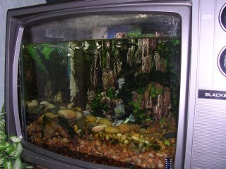 TV tank - a fish tank made out of an old TV