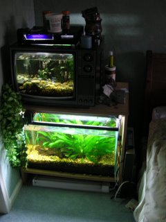 Photo of both tanks showing how much brighter the planted tank is with the new light hood.