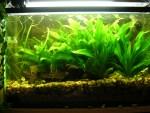 Aquarium Size