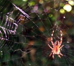 web_spider.jpg