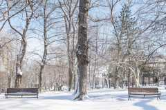 A Snowy Kings Square Tree Between Two Park Benches Photograph