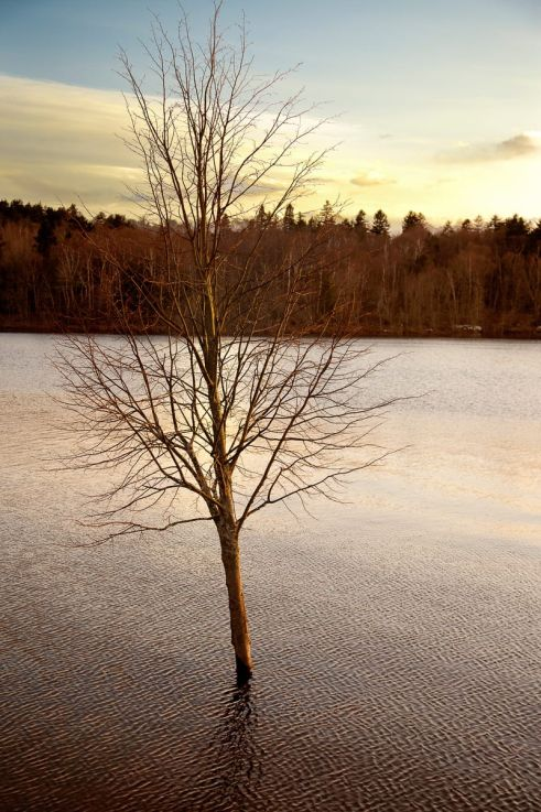Click thumbnail to see details about photo - Saint John Sinking Tree Photograph