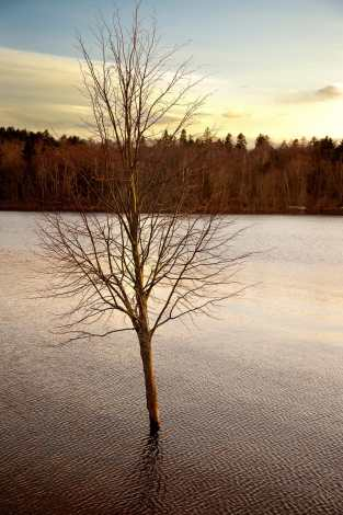 Saint John Sinking Tree Photograph