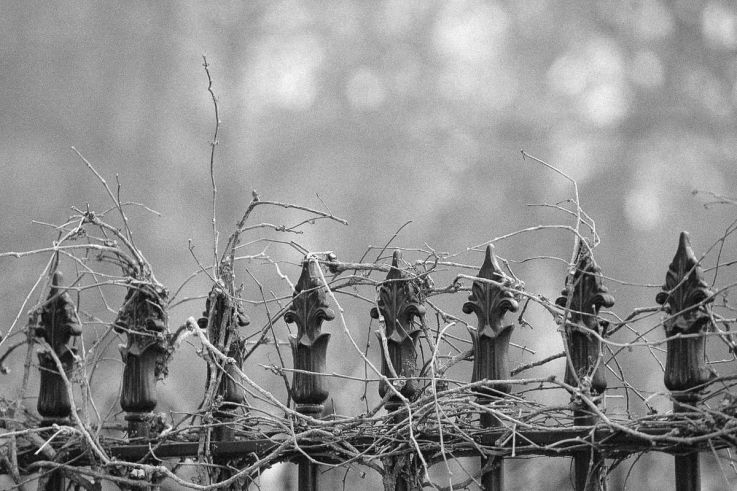 Click thumbnail to see details about photo - Saint John Wrought Iron Vines Photograph
