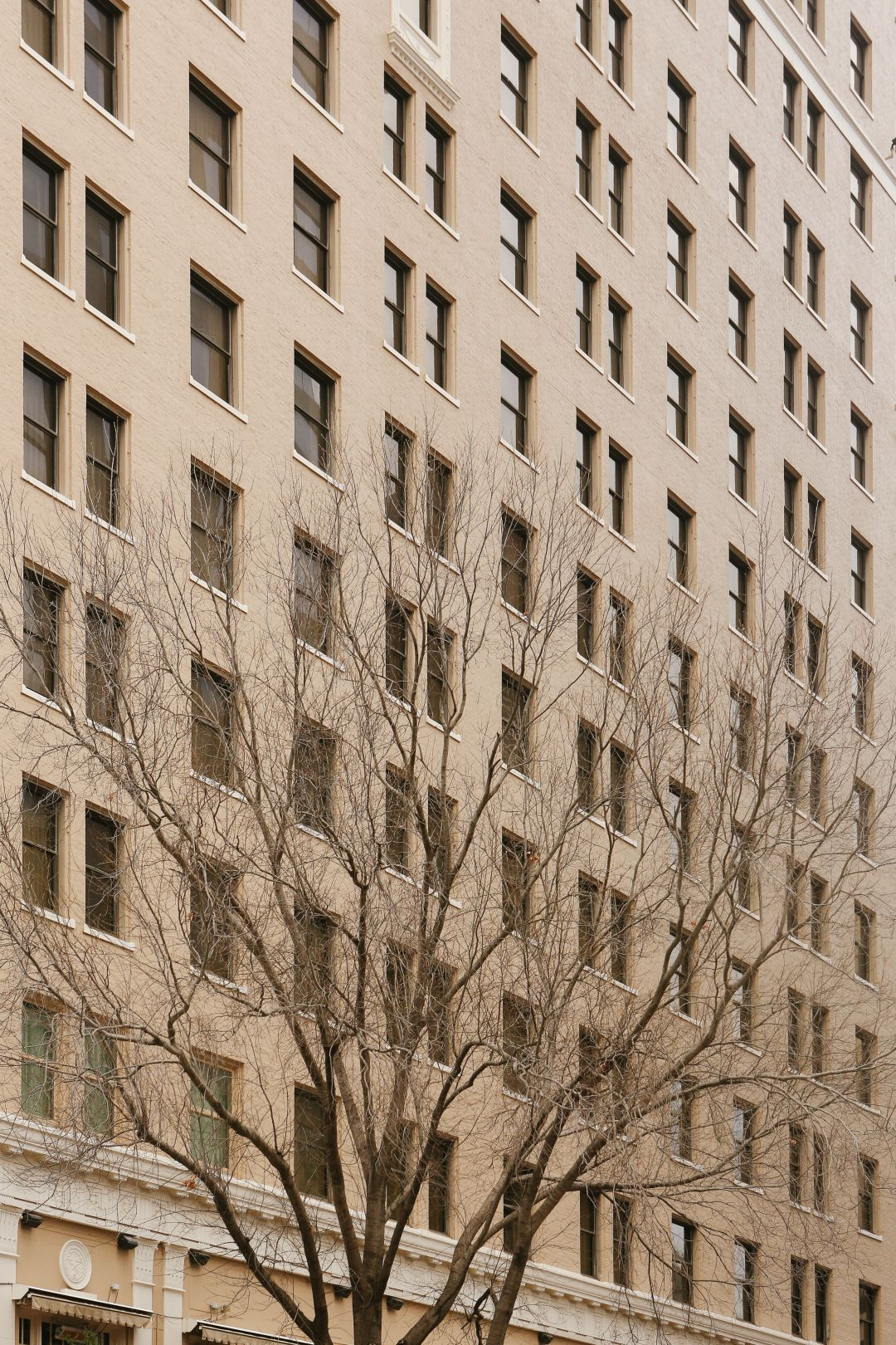 A photo depicting Austin Texas Building Facade With Tree