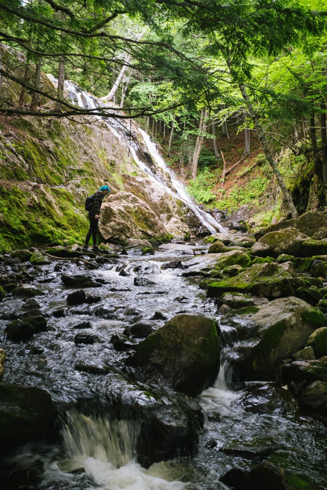 A photo depicting Exploring Moss Glen Kingston