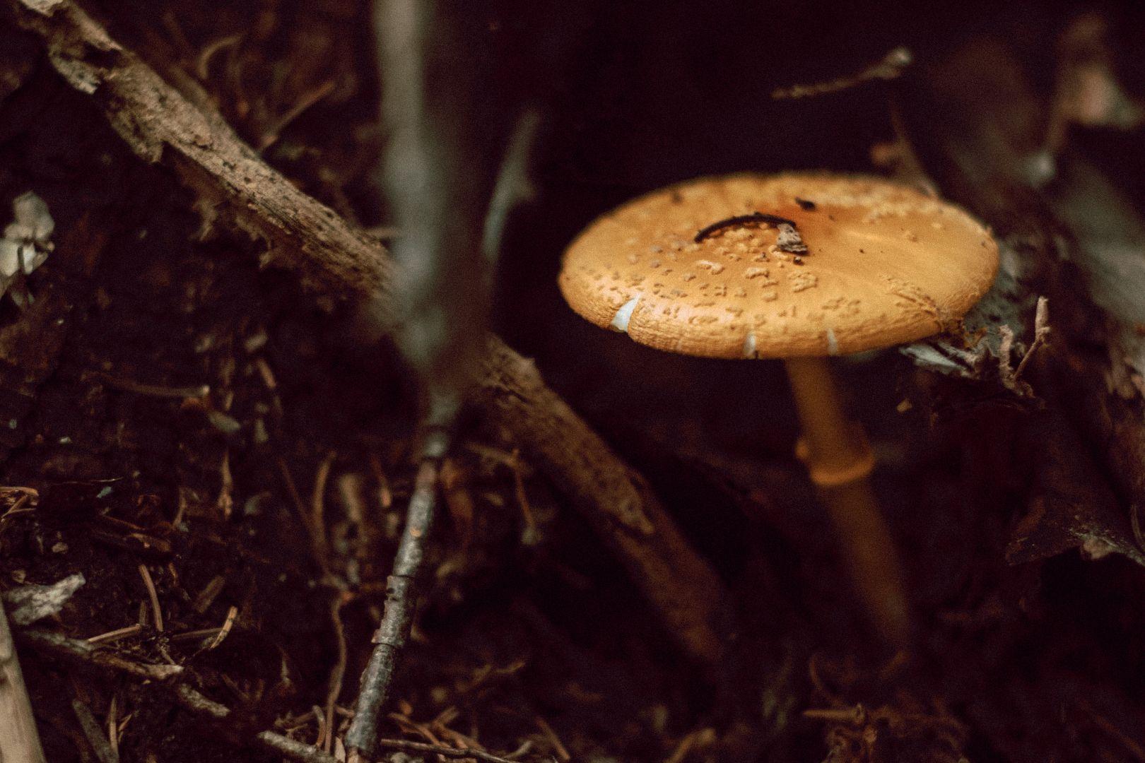 A photo of Mushroom Closeup