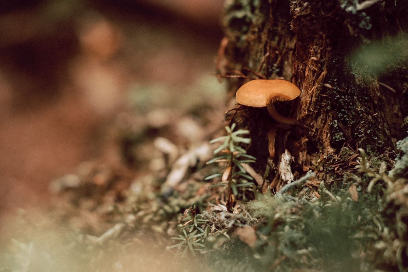 Click thumbnail to see details about photo - Mushroom growing on moss