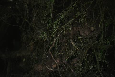 A photo of Tree Roots In Ground