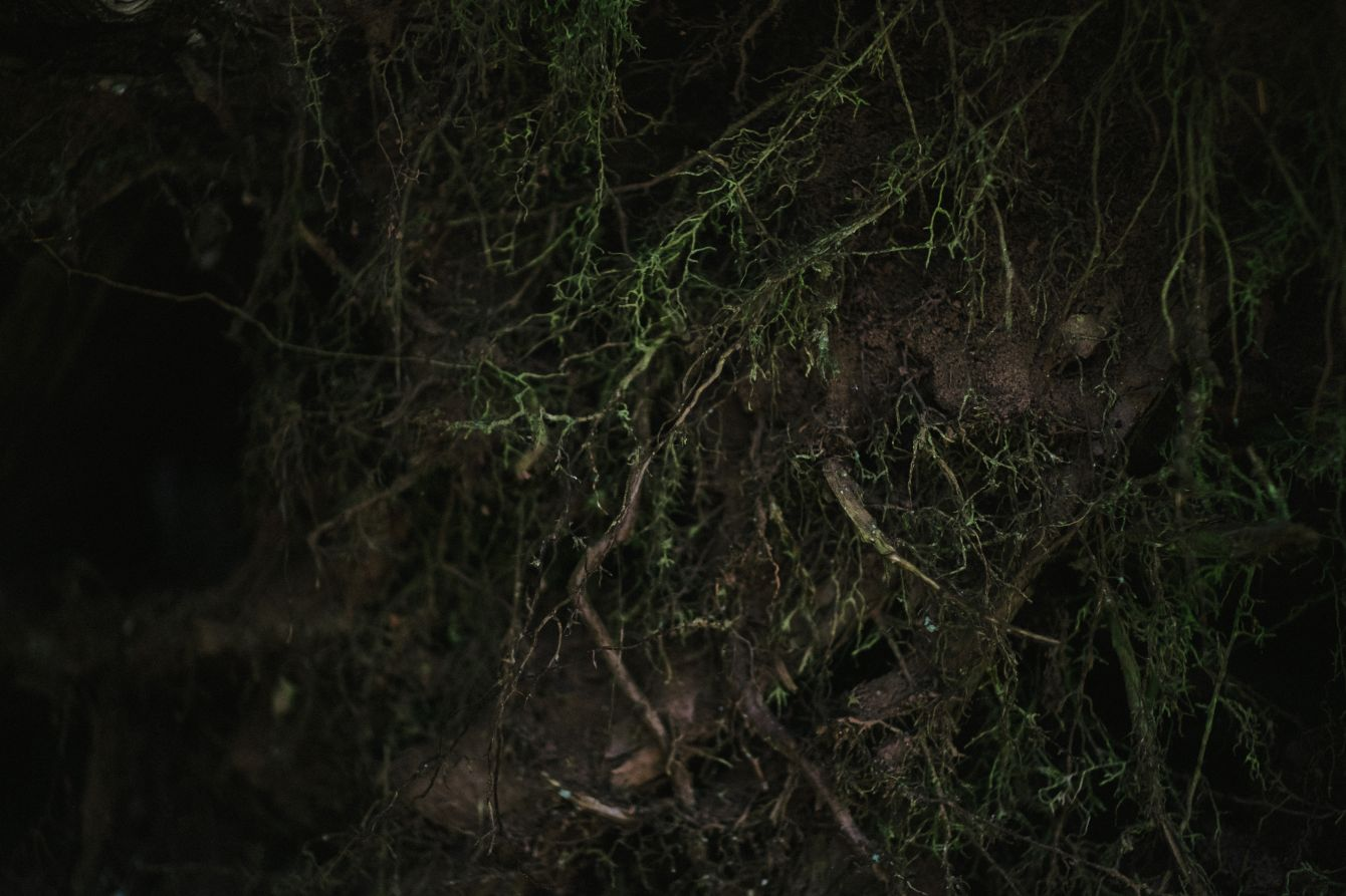 Click thumbnail to see details about photo - Tree Roots In Ground