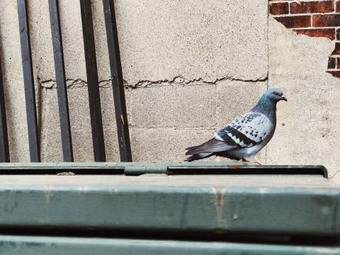 A photo of Birds 05 1