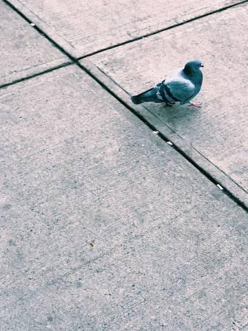 A photo of Birds 06 1