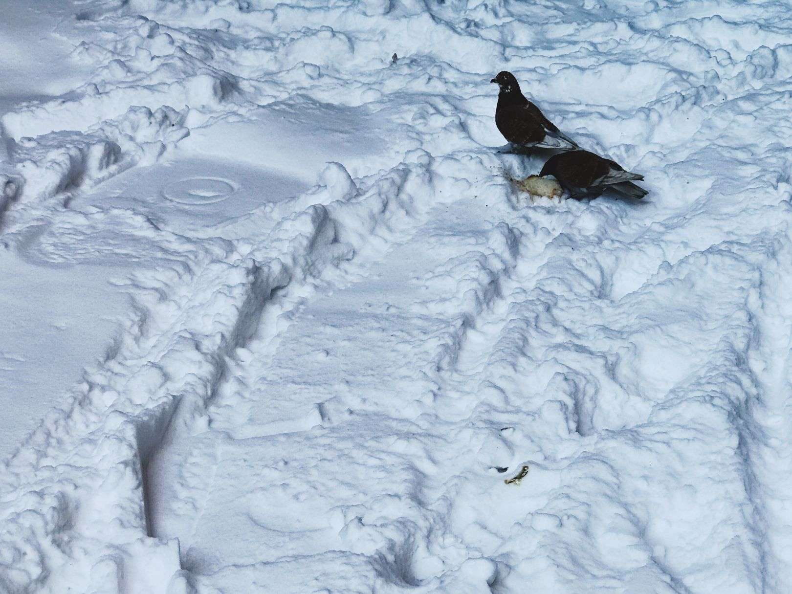 A photo depicting Two birds in some snow tracks