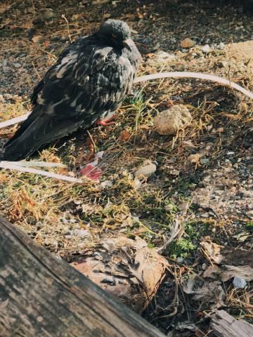 A photo of Birds 15 1