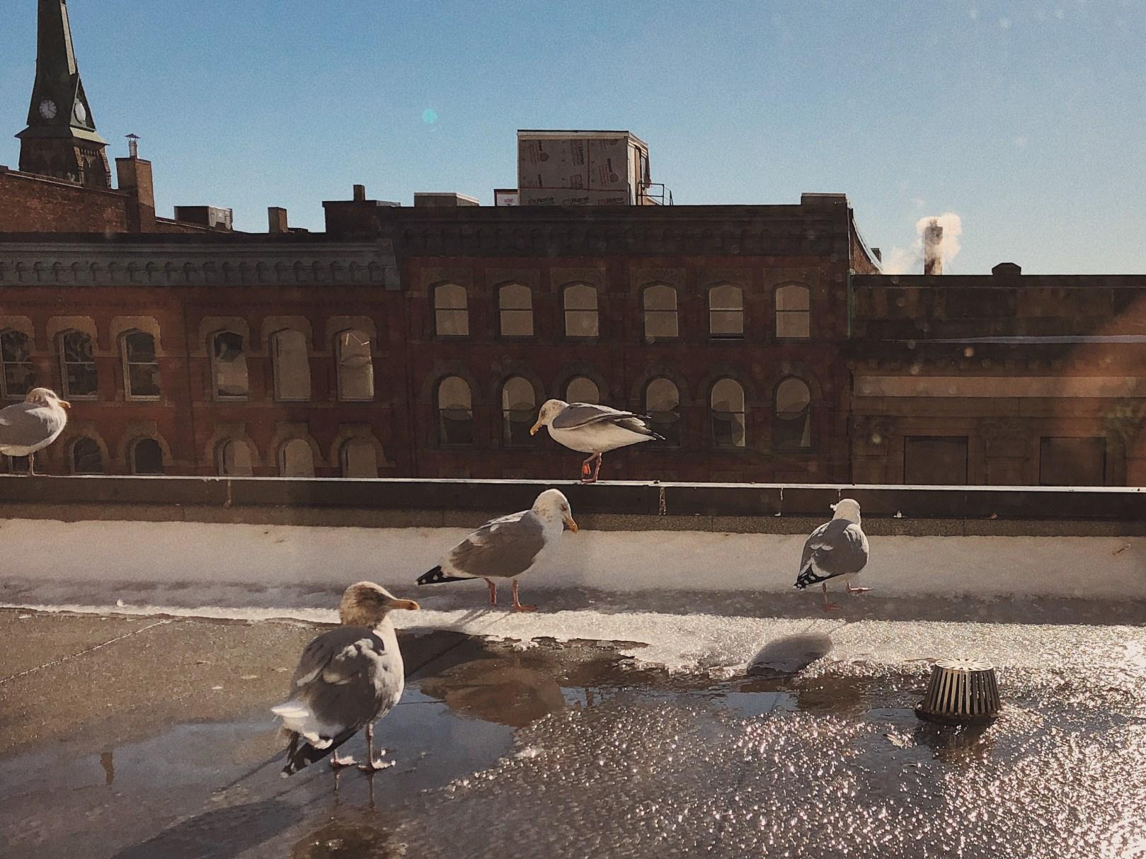 A photo of Birds 28 1