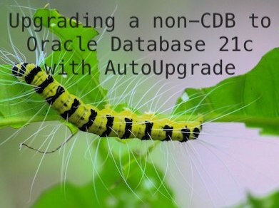 Upgrading a non-CDB to Oracle Database 21c with AutoUpgrade