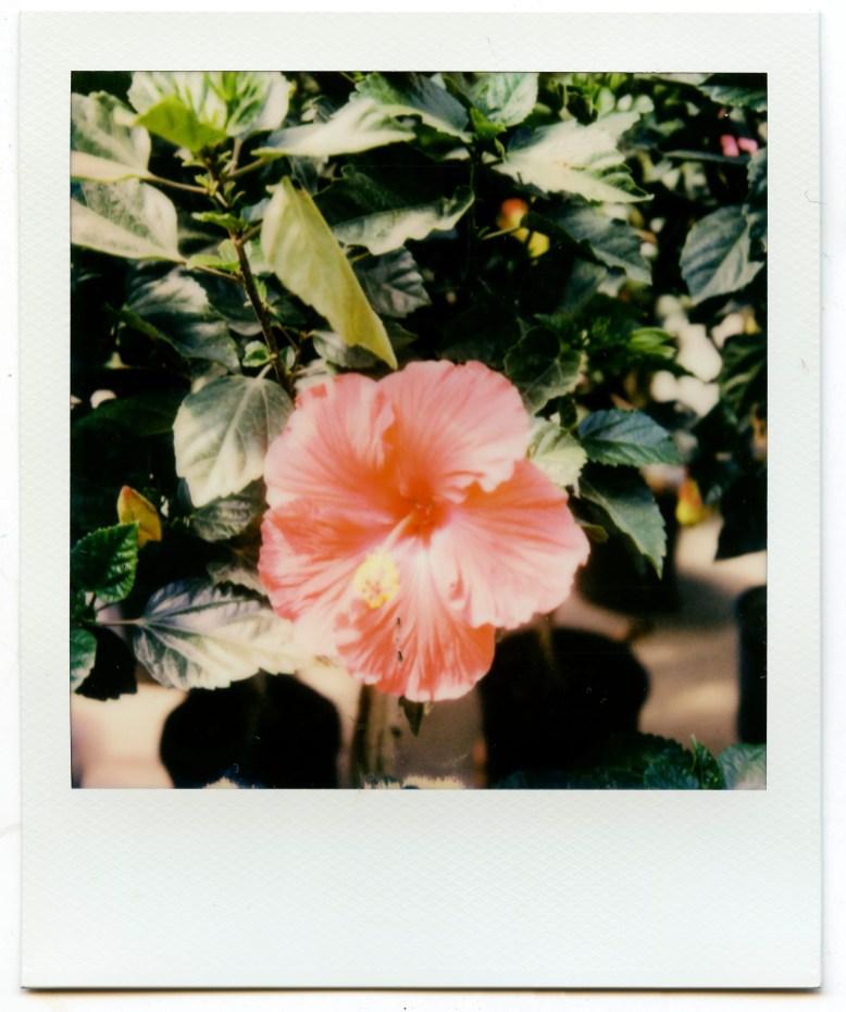 PolaroidSX70Color-1