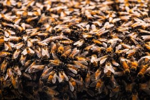 bees-235626__340
