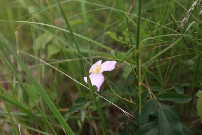 Wildflowers between Houston and Hartville Missouri