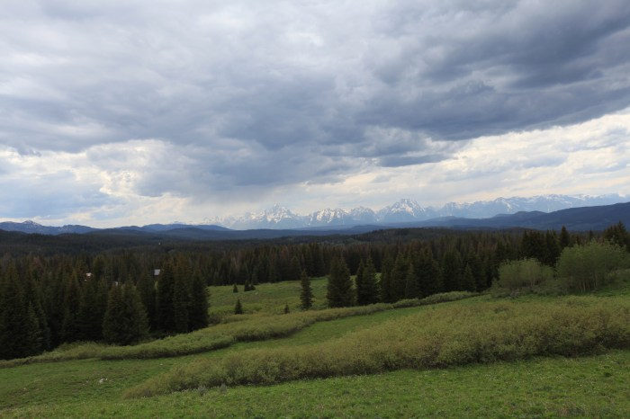The Tetons in the distance. --Grand Teton National Forest at Teton Overlook.