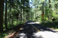 Lush forests cover the Western side of McKenzie Pass in Willamette National Forest, OR.