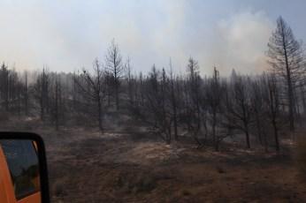 The fire has already burnt through this area. --Ochoco Pass, OR.