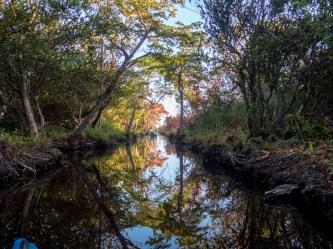 Into the Zapata Swamp