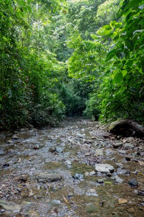 The easiest way around the forest in Quebrada Felix is to walk up the river.