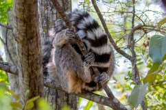Southern Madagascar-005