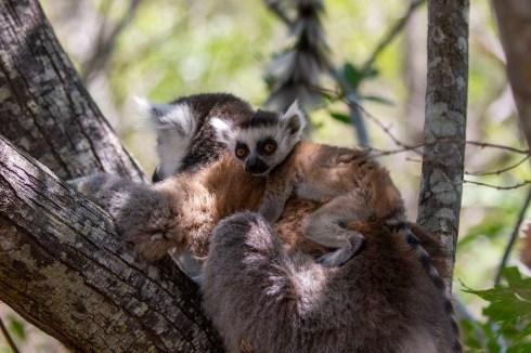Southern Madagascar-006