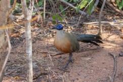 Southern Madagascar-019