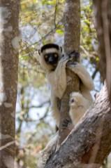 Southern Madagascar-027