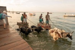The tide was in when we set off to Nosy Ve, in zebu carts