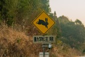 Beware of the giant rabbit