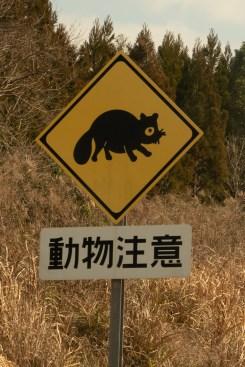 Beware of the Raccoon Dog