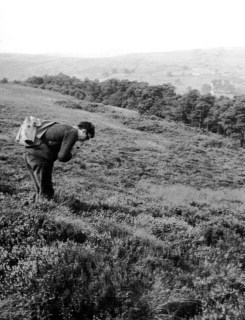 Sampling vegetation on The Roaches in 1969