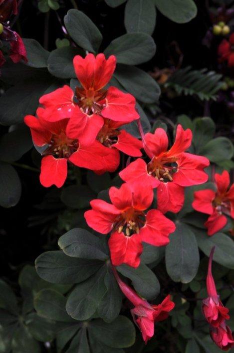 20140702 036 Wightwick Manor & Gardens