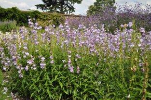 20140709048 Kew Gardens