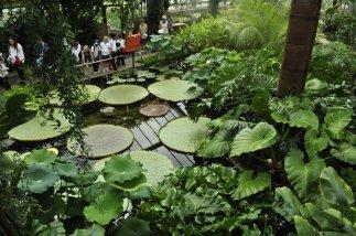 20140709079 Kew Gardens-001