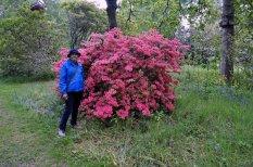 In the garden of Brodie Castle