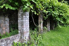 Remains of a building on the north side of the lakeside garden [13], now covered in vines.