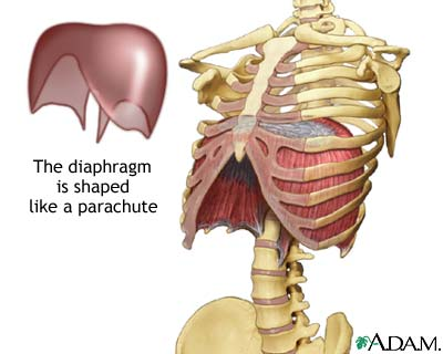 Diaphragmatic breathing uses the right muscles to fill your lungs