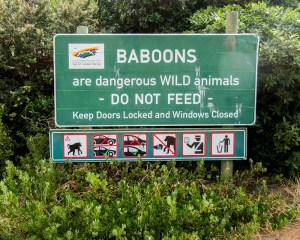 **Baboons.IMG_0695