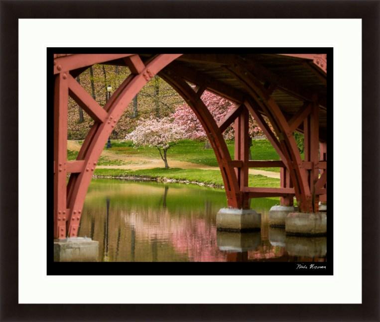 Elm Park Bridge and Tree