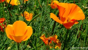 Buttery orange